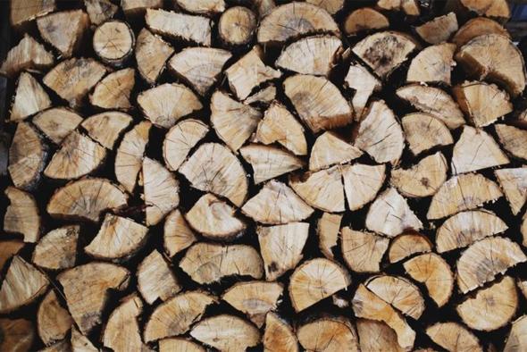 bambou_immobilier_metiers_prescription-durable